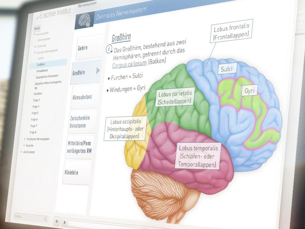 iSMK-Nervensystem-02