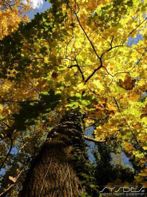 Baum mit bunten Blättern