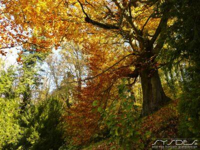 Bunter Baum im Herbstwald