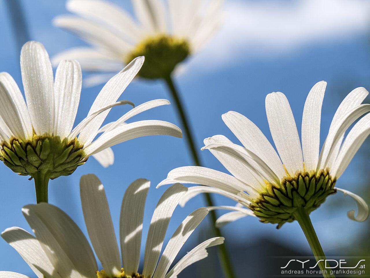 Fotografie Blüten