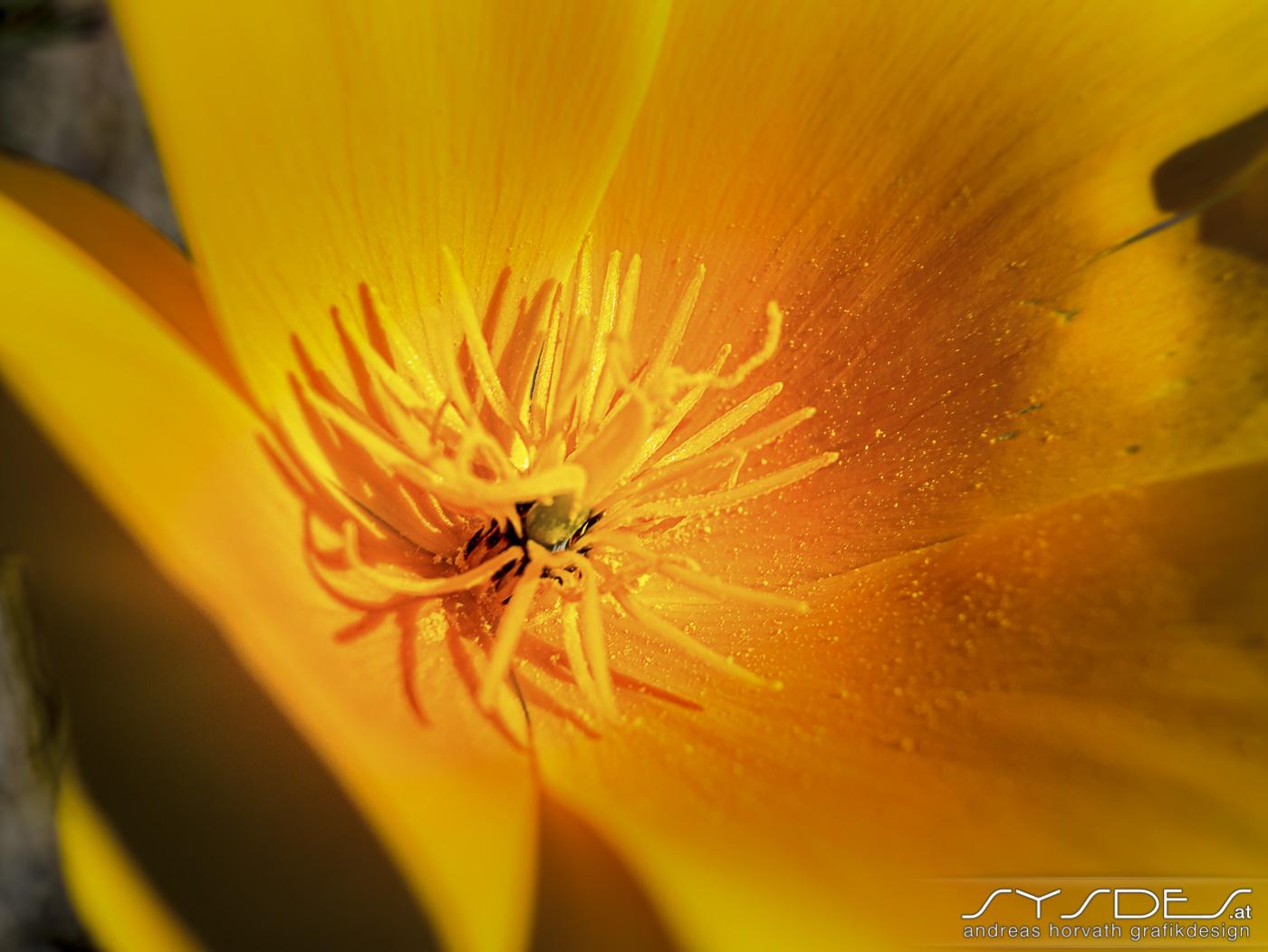 Makroaufnahme eines Blütenstempel