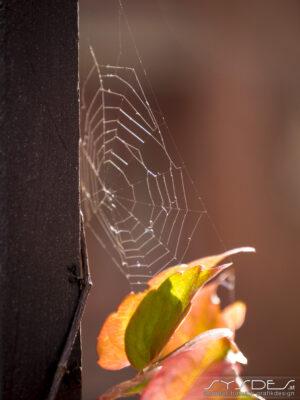 Bunte Blätter und Spinnennetz
