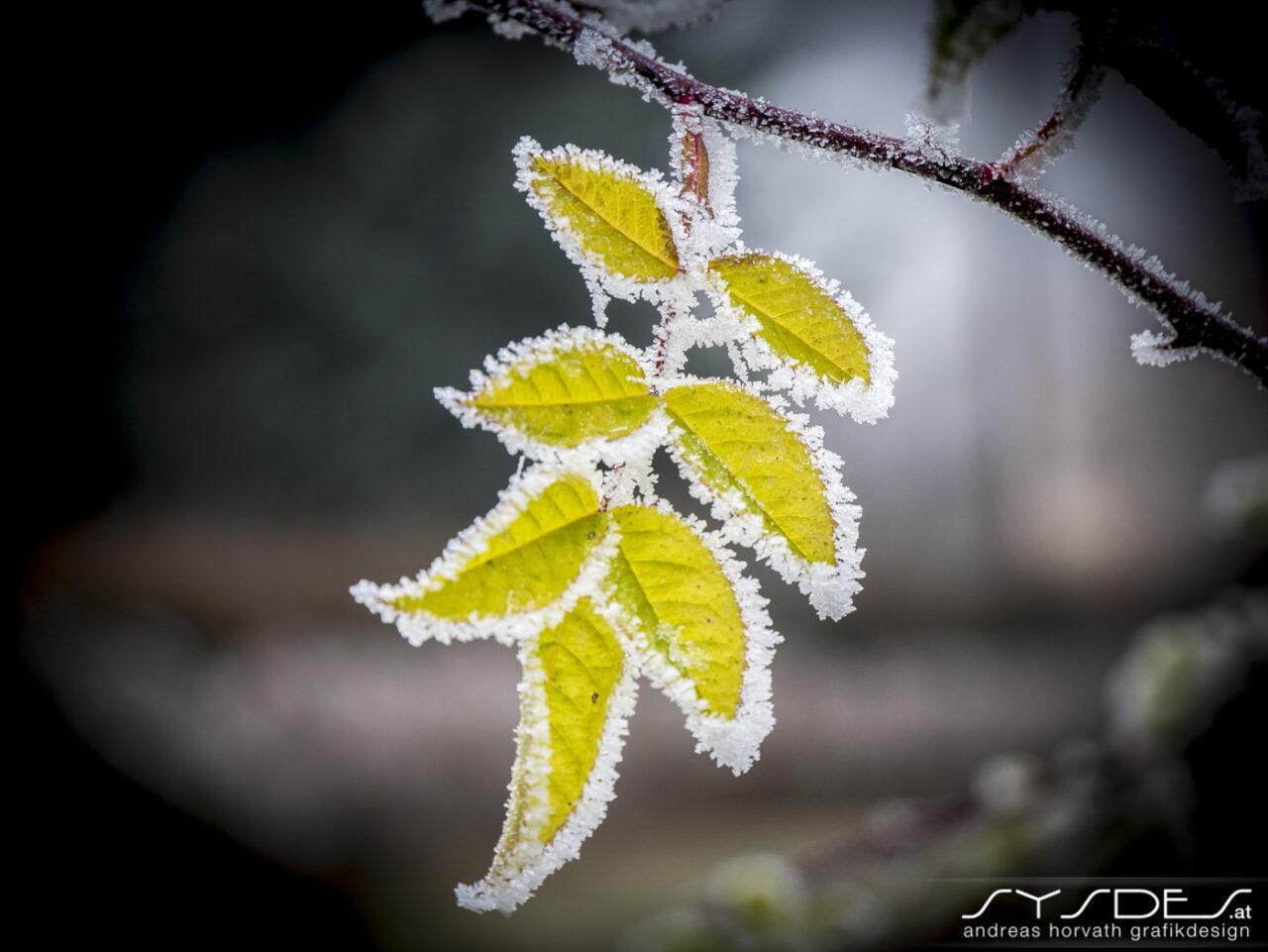 Fotografie Jahreszeiten