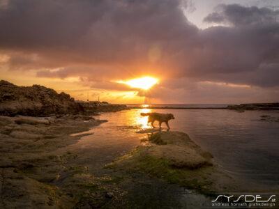 Sonnenuntergang Malta mit Hund